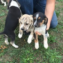 Mixed Puppies