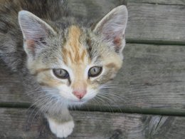 Feline Adopt-a-thons to be held Oct. 25th and Nov. 1st