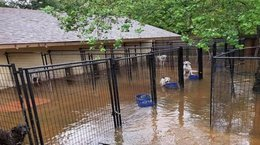 Local Humane Society rescues Hurricane Harvey animals