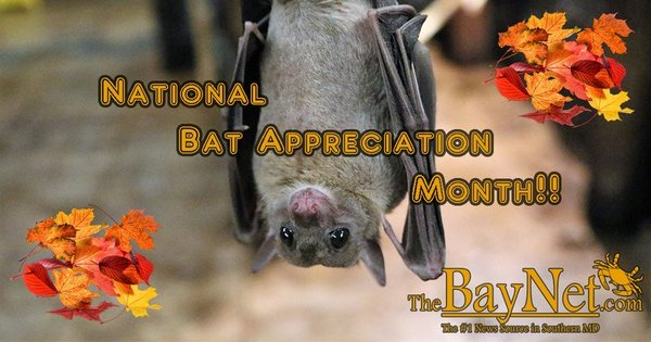 October is National Bat Appreciation Month!!