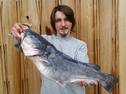 Record White Catfish Caught in Southern Potomac River