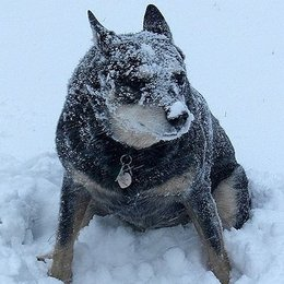 Avoid Cold Weather Hazards for Pets