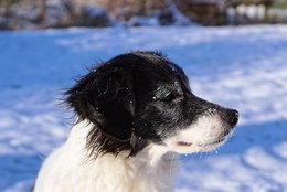 Caring for your pet in the winter